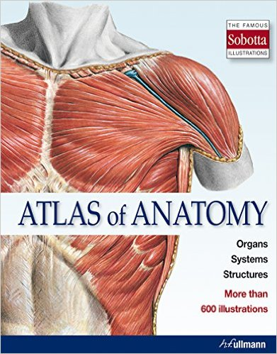 Atlas Of Anatomy Isbn 9783848009145 Available From Nationwide