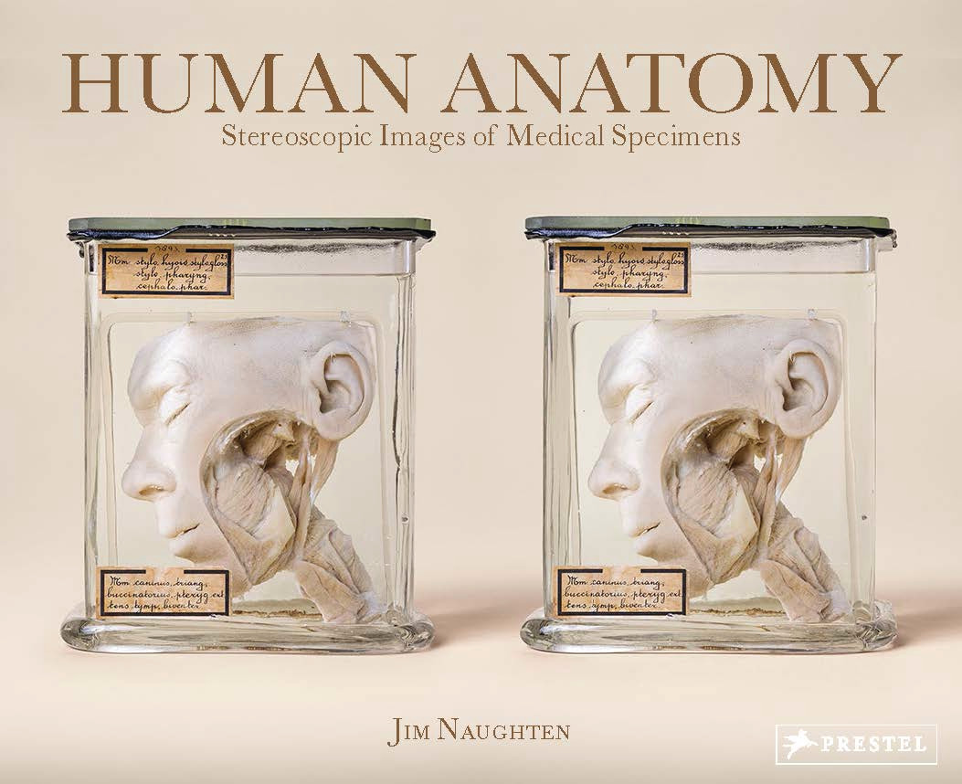 Human Anatomy, ISBN: 9783791383293 - available from Nationwide Book ...